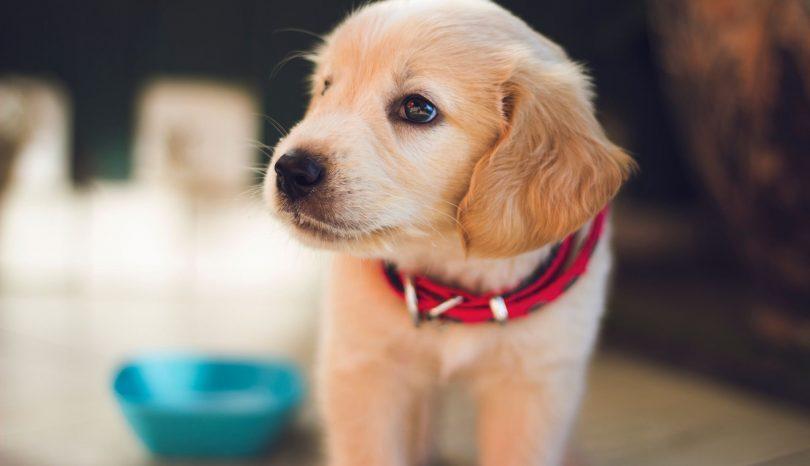 Att tänka på inför hundköp