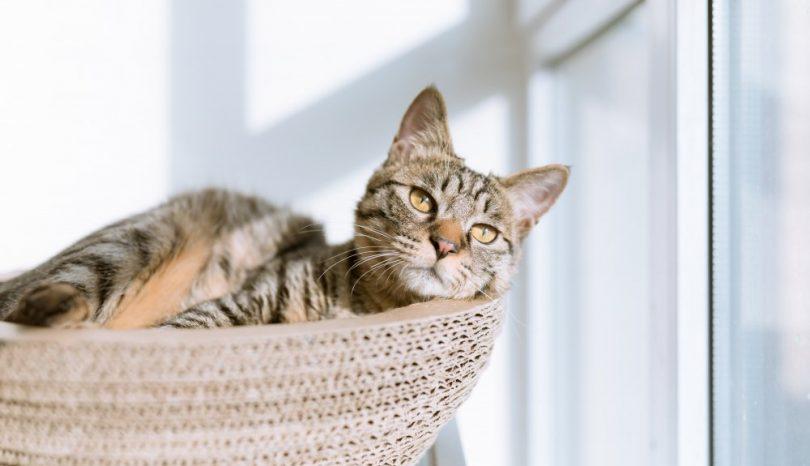 Kattpensionat i Stockholm – den pålitliga kattvakten
